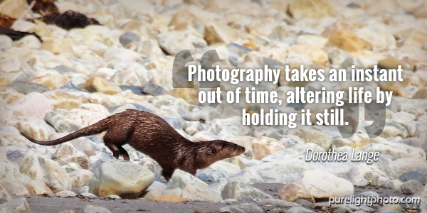 """""""Photography takes an instant out of time, altering life by holding it still."""" - Dorothea Lange"""