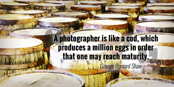 """A photographer is like a cod, which produces a million eggs in order that one may reach maturity."" - George Bernard Shaw"